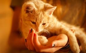 Picture cat, comfort, hands
