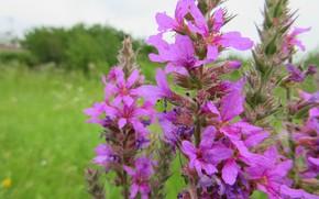 Picture macro, flowers, meadow, Meduzanol ©