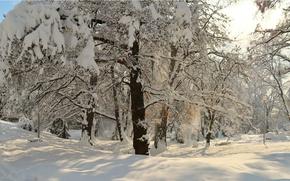 Picture Winter, Snow, Park, Frost, Winter, Frost, Park, Snow