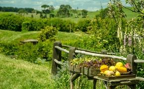 Picture Nature, Summer, Pumpkin, Plants, Nature, Summer