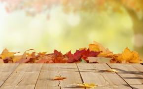Wallpaper leaves, blur, maple, autumn, wood