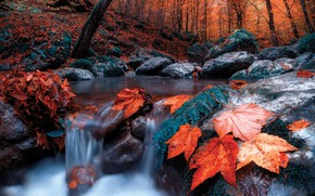 Wallpaper forest, autumn, landscape, stream, leaves, trees, nature, for, stones