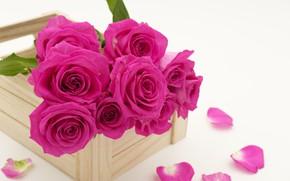Picture roses, bouquet, petals, bouguet, rosebuds, wooden box