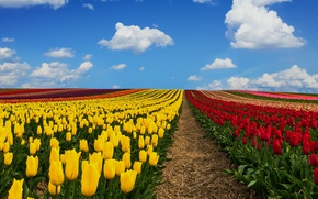 Picture field, the sky, clouds, Germany, tulips