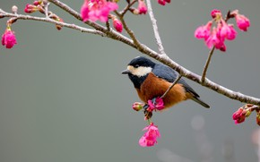 Picture bird, branch, spring, tit, baby