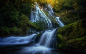 Picture forest, light, nature, river, rocks, waterfall, stream
