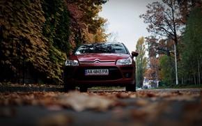 Picture machine, autumn, leaves, Citroen, Citroen, Car, car, France, Citroen C4