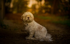 Picture nature, background, each, dog, wool