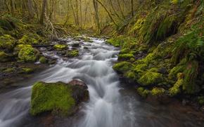 Picture forest, stream, moss, Oregon, river, Oregon, Columbia River Gorge, the Columbia river gorge, Gorton's Creek, …