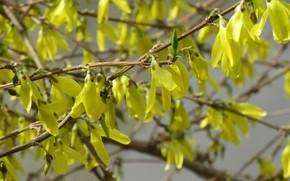 Picture Bush, petals, spring 2018, Mamala ©