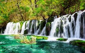 Picture greens, trees, Park, waterfall, moss, China, the bushes, reserve, Jiuzhaigou