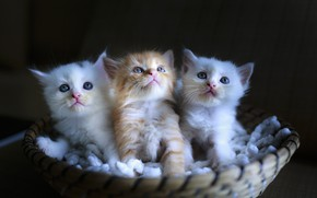 Picture kittens, kids, basket, sitting, faces