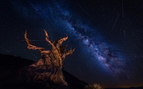 Picture the sky, stars, night, tree