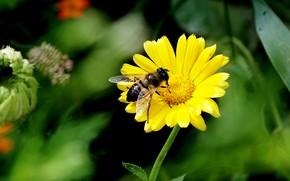 Picture Macro, Flower, Bee, Macro, Bee