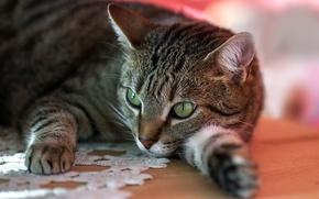 Wallpaper striped, eyes, stay, cat