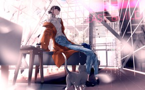 Picture cat, girl, anime