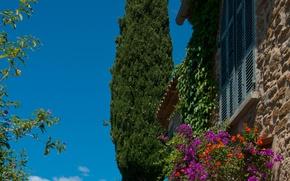 Picture France, Nature, Nature, France, Provence-Alpes-Cote d'azur, Bormes-Les-Mimosas, Bormes les Mimosas