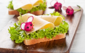 Picture leaves, cheese, bread, sandwich, vegetables, decor, salad, bread, cheese, vegetables, radishes