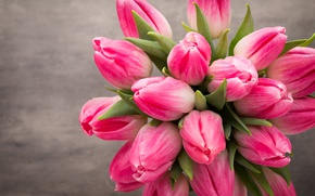 Wallpaper beautiful, pink, fresh, white, tulips, tulips, bouquet, spring, flowers, flowers