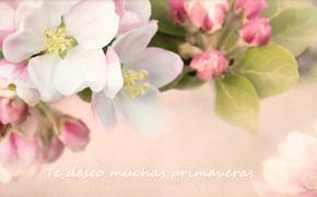 Picture macro, branch, spring, Apple