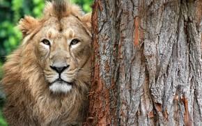 Picture tree, Leo, beast
