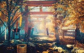 Picture autumn, flowers, nature, torii
