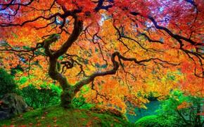 Wallpaper leaves, moss, autumn, maple, tree