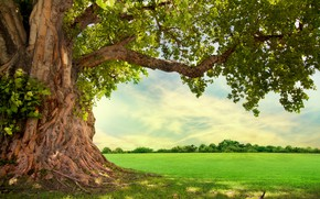 Picture tree, meadow, crown