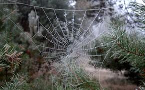 Wallpaper frost, macro, web, nature