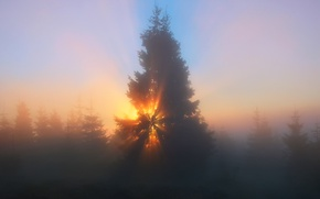 Wallpaper forest, the sky, the sun, rays, light, trees, nature, fog, haze