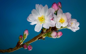 Wallpaper garden, spring, branch, flowers