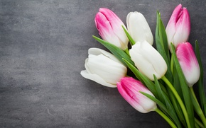 Wallpaper beautiful, pink, fresh, white, pink, white, tulips, tulips, bouquet, spring, flowers, flowers