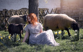 Picture girl, sheep, spring