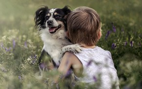 Picture dog, boy, friendship