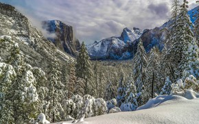 Wallpaper forest, Yosemite national Park, Yosemite valley, ate, Yosemite National Park, CA, Sierra Nevada, winter, valley, ...