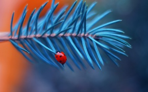 Wallpaper ladybug, needles, insect, beetle, branch, macro, bokeh