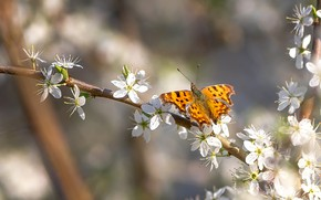 Picture flowers, tree, butterfly, branch, insect