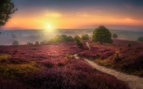 Picture Herman van den Berge, The Veluwezoom, field, sunset