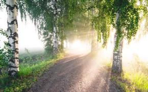 Wallpaper road, summer, light, fog, morning, birch