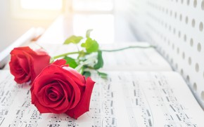 Picture flower, sheet, notes, Rose