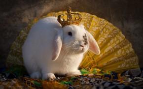 Picture animal, crown, rabbit