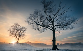Picture winter, trees, sunset, Norway