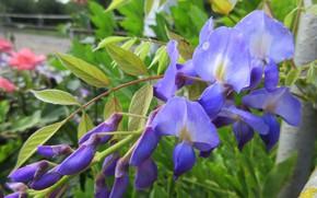 Picture greens, macro, flowers, mamala ©