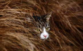 Picture grass, eyes, cat, muzzle