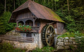 Picture forest, flowers, a water mill