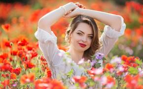 Picture look, girl, flowers, Maki, hands, meadow