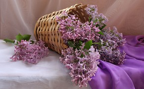Picture flowers, basket, bouquet, spring, still life, lilac