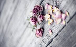 Picture roses, bouquet, petals, wood, pink