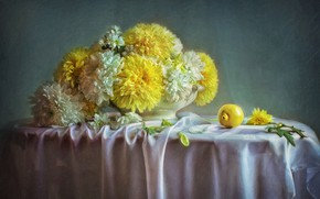 Picture flowers, lemon, picture, chrysanthemum