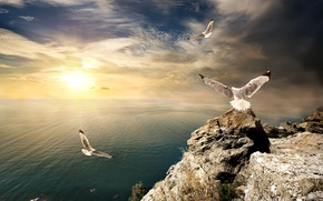 Wallpaper seagulls, stones, Crimea, horizon, the sky, the sun, clouds, rocks, birds, sea, shore, dawn, rays, ...
